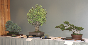 COLLECTION TREES