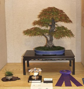 2014 Midwest Bonsai Exhibit Bonsai Eejit
