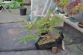 Ray's larch in for advice