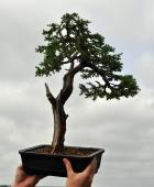 Kieran's pine after