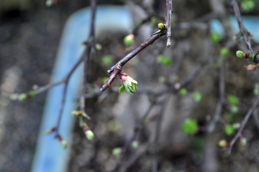 Signs of Spring (3/5)