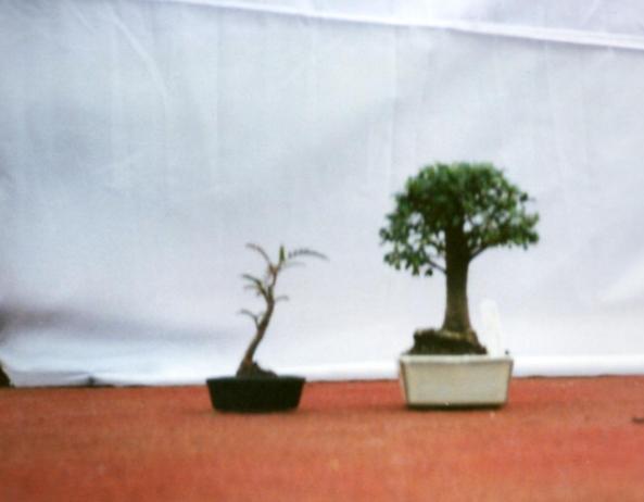 Hillmount Show 1995 2