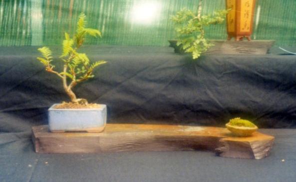 Sorbus 2000