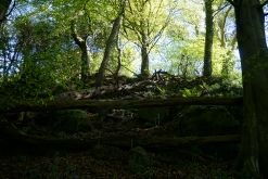 Killynether Woods