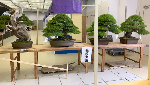 TREES FOR JUDGING
